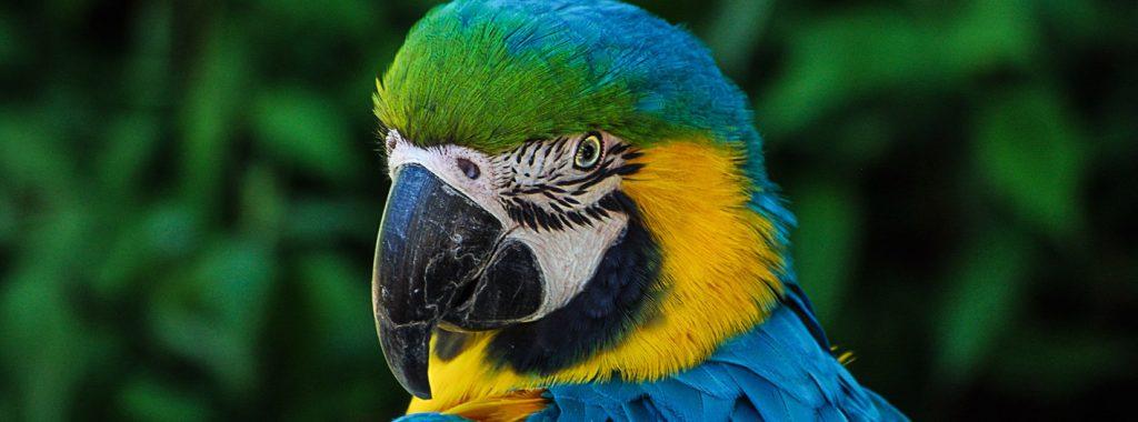 Checklist voor het houden van vogels