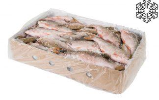 Diepvries zoetwatervis voorn 10 kg