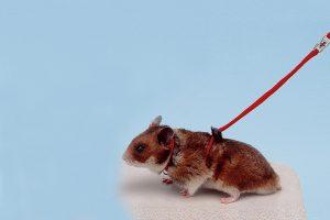 Ferplast hamstertuig met looplijn