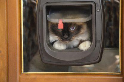 Ferplast Swing Microchip kattenluik