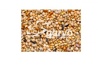 Garvo Tropical Gold