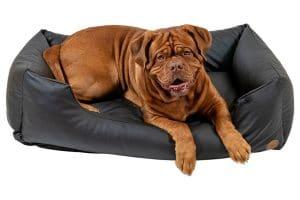 De Jack & Vanilla Classy Sofa is een heerlijke mand gemaakt van kunstleder voor uw hond. Verkrijgbaar in drie kleuren, onder andere Pitch (zwart)