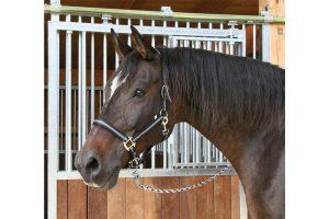 Kerbl haltser headcollar Mustang