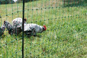 Elektrificeerbaar afrasteringsnet voor pluimvee groen