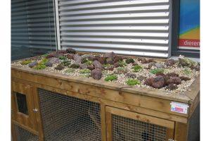 Kippenhok met plantenbak
