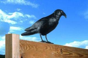 Kunststof kraai duivenverjager