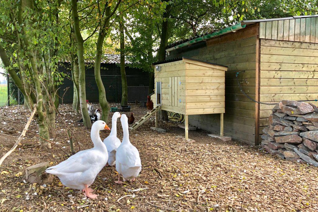 Maatwerk kippen nachthok met hokopener