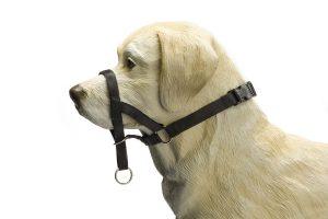 Nylon Dog Control