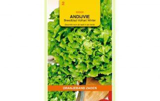 Oranjeband Zaden breedblad andijvie Volhart Winter
