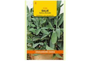 Oranjeband Zaden salie (Salvia officinalis)