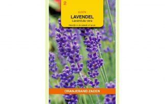 Oranjeband Zaden lavendel (Lavandula vera)