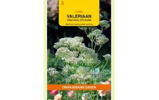 Oranjeband Zaden valeriaan (Valeriana officinalis)