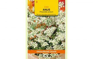 Oranjeband Zaden anijs (Pimpinella anisum)