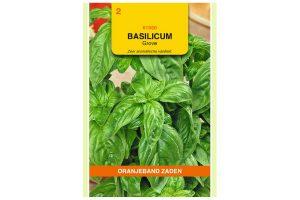 Oranjeband Zaden grove basilicum (Ocimum basilicum)