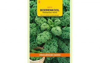 Oranjeband Zaden boerenkool Westlandse herfst - laattype