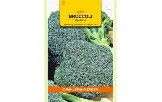 Oranjeband Zaden broccoli Calabria
