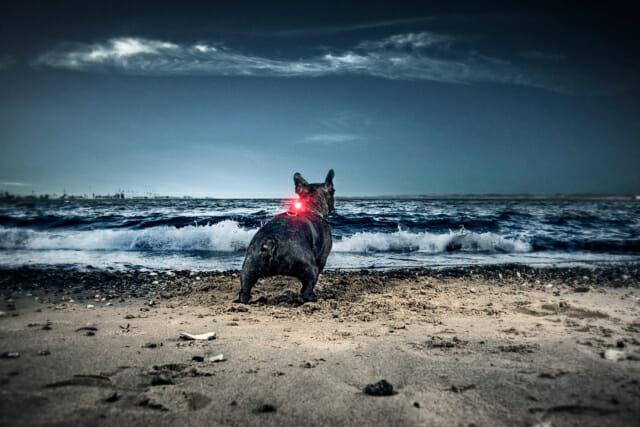 Orbiloc Dog Dual veiligheidslichtje LED