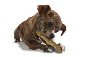 Petstages Durable Dogwood Sticks