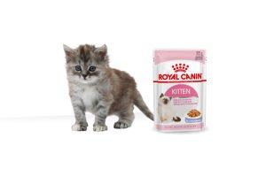 Royal Canin Kitten Jelly maaltijdzakjes