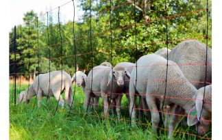 TitanNet afrasteringsnet voor schapen