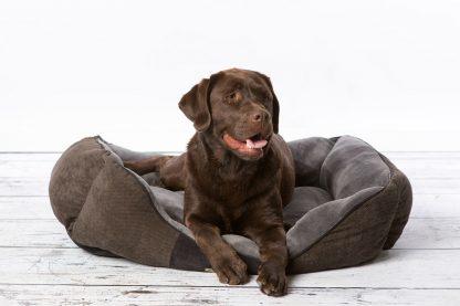 Scruffs Chester Box Bed hondenmand