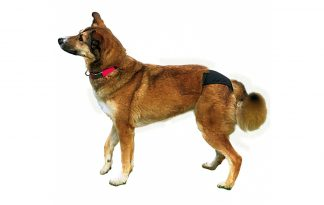 Trixie Protective Pants