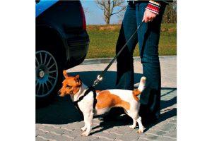 Trixie autogordel hondenlijn