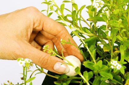 Velda groeibollen