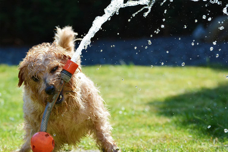 Hond met tuinslang