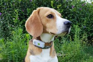 De Weenect GPS-tracker voor honden is de perfecte tool om realtime te kunnen zien waar uw huisdier is. Deze maakt het mogelijk om uw huisdier te volgen waar hij of zij ook is. Weenect biedt een onbeperkte lokalisatie in real time en zonder afstandslimiet.