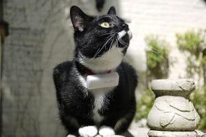 De Weenect GPS-tracker voor katten is de perfecte tool om realtime te kunnen zien waar uw huisdier is.