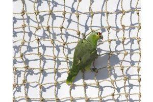 ZooFaria klimnet voor kromsnavels