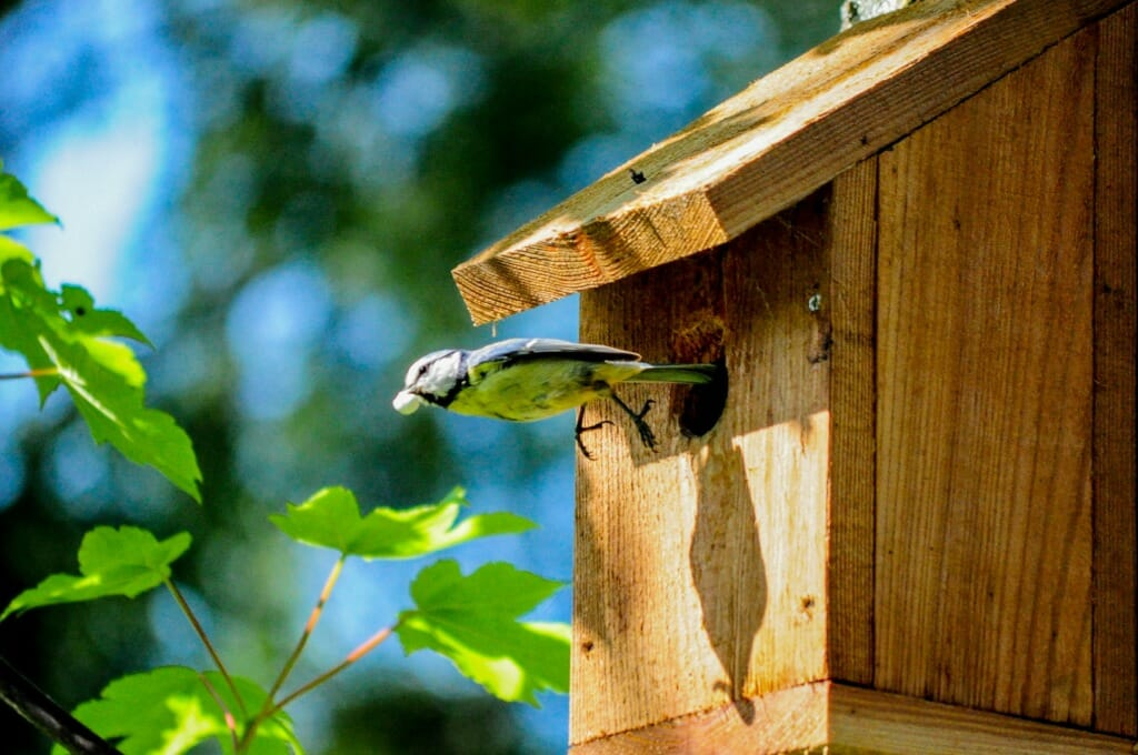Het is voor sommige vogelsoorten erg lastig om een fijn nestplekje te vinden. Ondersteun ze door nestkastjes op te hangen in je tuin of de omgeving van je huis.   In onderstaande blog geven we tips of soorten nestkastjes en hoe je deze het beste kan plaatsen.