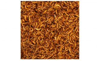 Buffalowormen