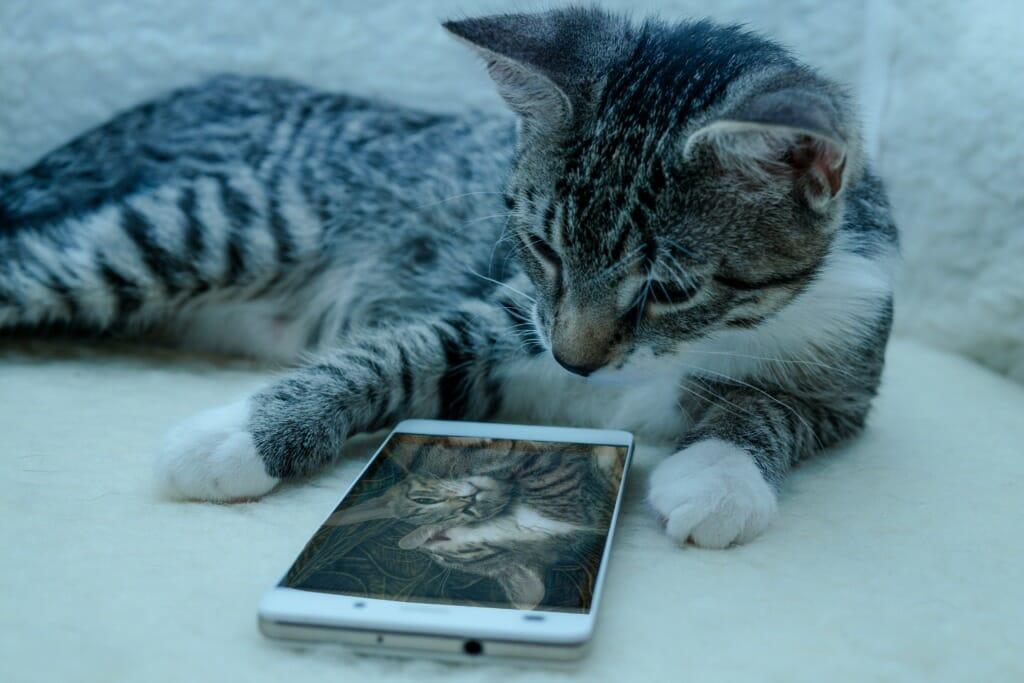 Tegen de verveling: Huisdierenfotografie