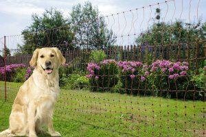 Afrasteringsnetten voor honden