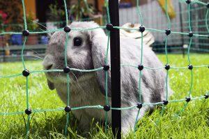 Afrasteringsnetten voor konijnen