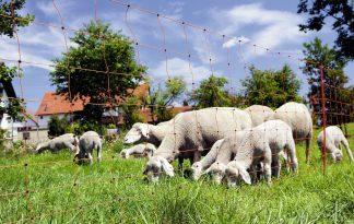 Afrasteringsnetten voor vee