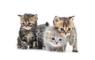 Benodigdheden voor nestje kittens