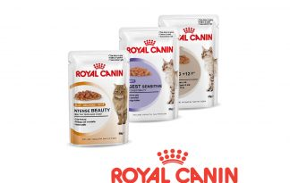 Royal Canin wet feline nutrition