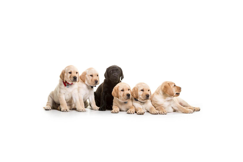 Benodigdheden voor nestje honden