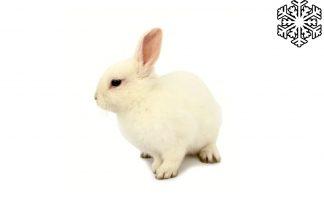 Diepvries konijnen