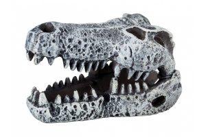 Trixie dinosaurus schedel