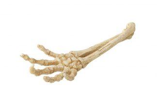 Aqua Della Skeleton Hand