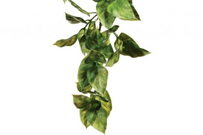 Exo Terra Hanging Rainforest Plant Amapallo