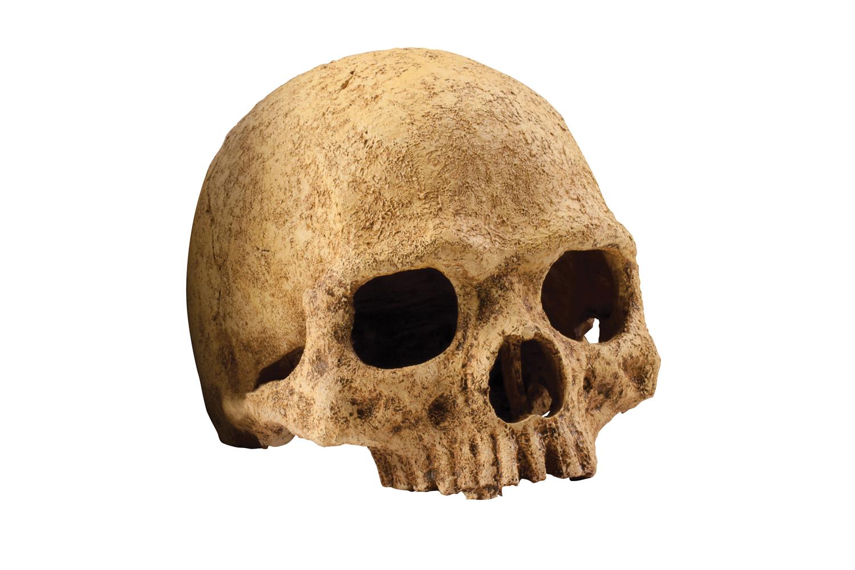 Exo terra primate skull - Terras schuilplaats ...