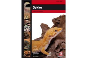 Gekko (Jan-Cor Jacobs)