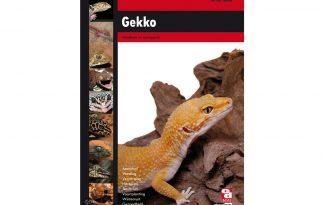 Gekko (Jan-Cor Jacobs)