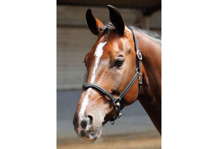 Harry's Horse halster leder Crystal V zwart