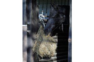 Harry's Horse standaard hooinet
